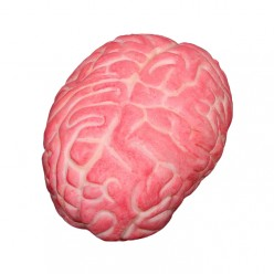 Мозг (имитация) 14*10*10см